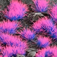 Alien Neon Tufts - Gamer's Grass