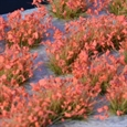 Gamers Grass: Red Flowers